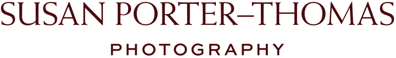 Award winning photographer Susan Porter-Thomas Photography - Latest photo shoots, behind the scenes and useful hints and tips for Family and Maternity photography