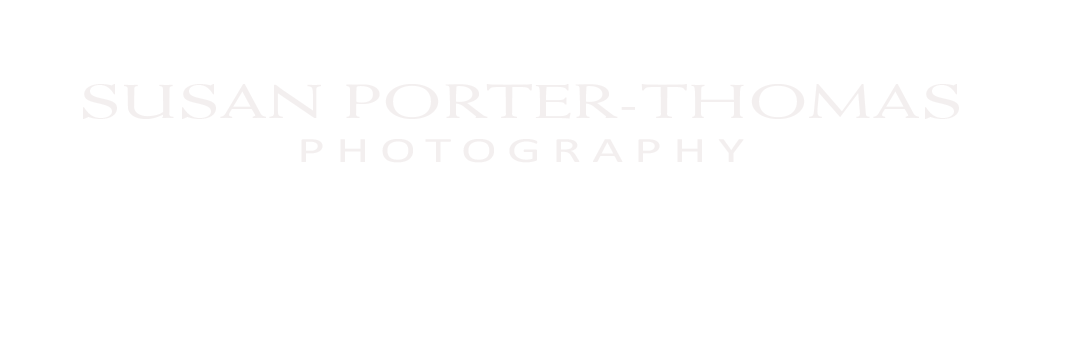 London Photographer Susan Porter-Thomas logo